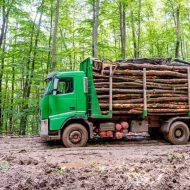 transporturi lemne-WWF